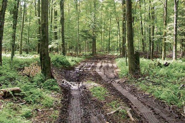 Comment estimer la valeur d'un bois ?